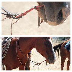 Nez Perce style war bridle. Pretty rare and needing the lightest touch to avoid inflicting pain. The goal is communication between rider and horse not force. Used by Indians 1840s and earlier. A small loop, just large enough to go in the mouth, encircling the lower jaw. Tie a secure knot. Place the loop around the jaw so the rope rests in the natural gap between the horse's teeth. Horse Gear, Horse Tack, Cowboy Crafts, Western Bridles, Horse Training Tips, Horse Jewelry, Stop Animal Cruelty, Beautiful Horses, Communication