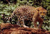 El Jaguarete  Fuente:wikipedia.org