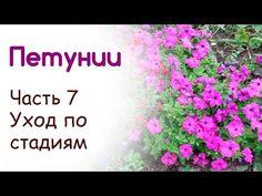 Посадка и выращивание петуний. Уход по стадиям развития (Часть 7) - YouTube