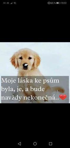 English Words, Labrador, Haha, Love You, Inspirational Quotes, Motivation, Motto, Funny, Animals
