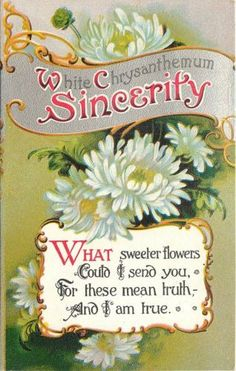 Language of Flowers postcard ~ Chrysanthemums ~ Sincerity