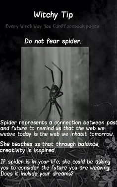 Witchy tip spiders. That will not be easy for me to not fear, but a thing to think about next time I see one. Wiccan Spells, Magic Spells, Magick, Healing Spells, Every Witch Way, Witch Spell, Practical Magic, Do Not Fear, Spirit Guides