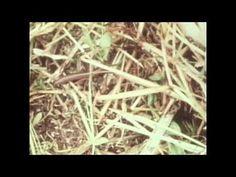 The One Straw Revolution by Masanobu Fukuoka  www.permacultureproject.com
