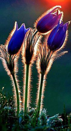 Flowers glistening in the morning sun