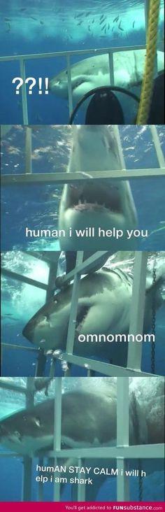 I will help I'm a shark....,