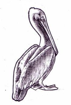 Free printable pelican drawing.