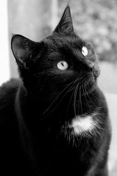 black cats are good luck