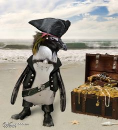 Captain Jack Penguin! Get it? Like Captain Jack Sparrow, but Penguin since it's not a sparrow, it's a penguin. Haha! Pirates of the Caribbean humor