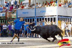 torodigital: Las fiestas del Grao de Castellón echan el cierre...