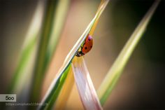 Bettle on leaf by Martin1969. Please Like http://fb.me/go4photos and Follow @go4fotos Thank You. :-)
