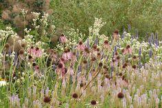 Echinacea pallida, Veronicastrum virginicum Fascination, Eryngium giganteum Silver Ghost, Calamagrostis acutiflora Karl Foerster