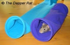 Homemade Rat Toy Ideas. [Extensive List.]