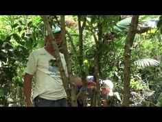 Agroflorestar -Manejo de agrofloresta de 5 anos