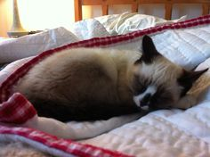 Müdes Kätzchen, Cotier-Model sein ist aber auch ein anstrengender Job