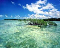 pictures+of+florida+keys | ... Florida Keys present an idyllic and varied playground for paddlers of