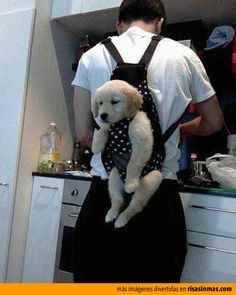 Si tienes un cachorrito travieso, quizás te interese usar este pequeño truco para tenerlo controlado.