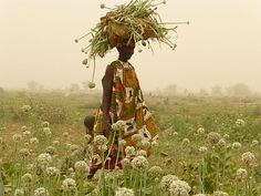 marie-monique robin visited organic farmers around the globe, including senegal, photo by marc duployer Lake Retba, Senegal Africa, Coat Of Many Colors, African Textiles, Colour Board, East Africa, People Of The World, Africa Travel, African Art