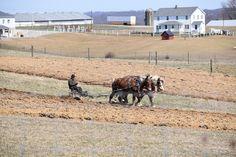 Amish Farming and Gardening Secrets ⋆ Big Blog Of Gardening