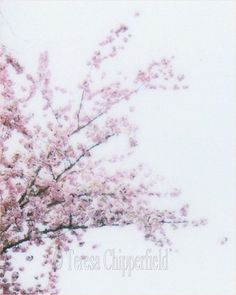 Pink Spring Blossoms Polaroid Image by PhotosByChipperfield
