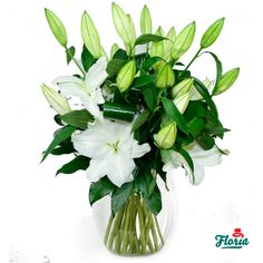 Bouquet of 5 white lilies, gracious and elegant, will draw the attention through its impregnating fragrance and royal looks.