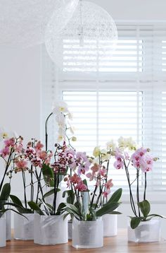 Orchids are not without reason, one of the most popular houseplants and more popular. We give you tips for the care of orchids, and how you can extend the Indoor Orchids, Indoor Plants, Indoor Garden, Home And Garden, Orchid Care, Moth Orchid, Orchid Plants, Winter House, Houseplants