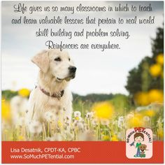 A reminder from Cincinnati certified dog trainer, Lisa Desatnik, CPDT-KA: every day there are opportunities for teaching with reinforcers in the environment.