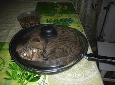 - I'll prepare dinner... | MaleZOO.eu