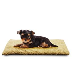 Premium Plush Pet Pad | Lenoxx Electronics Australia Pty Ltd