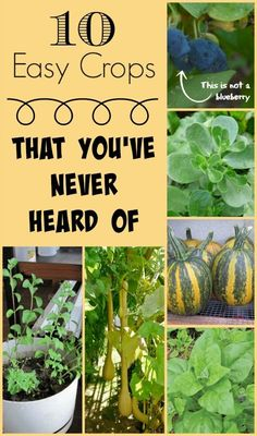 Step outside the norm and try growing some of these easy but relatively unknown garden plants. From vegetables and fruits to herbs and greens, these plants will take your homegrown produce up a notch!: