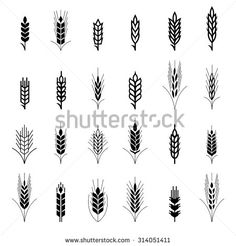 Wheat ear symbols for logo design. Agriculture grain, organic plant, bread food, natural harvest, vector illustration