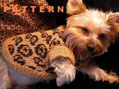 Sexy Beast Dog Sweater Knitting Pattern - Leopard