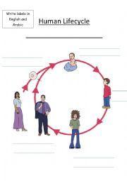 Human Life Cycle Worksheet   human life cycle vocabulary sheet this ...