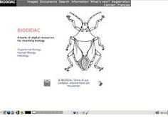 BIODIDAC es un banco de recursos digitales  para la enseñanza de la Zoología. Portal, Memes, Image Macro, Cell Biology, Vegetable Recipes, Animales, Meme
