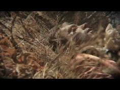 """Shearwater - """"Hidden Lakes"""" (official video)"""