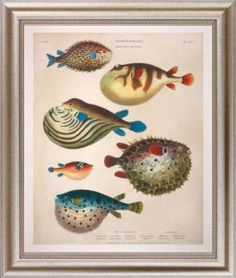 Large Antique Fish II Giclee