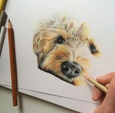 """I love drawing your pets. I believe a portrait lasts a lifetime, holding a beautiful memory forever. I go to great lengths to capture the personality, likeness and beautiful details of your pets, giving you a portrait you can cherish forever"". Realistic Drawings, Love Drawings, Animal Drawings, Art Drawings, Polychromos, Color Pencil Art, Dog Paintings, Colored Pencils, Coloured Pencil Drawings"