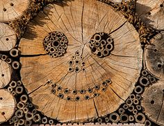 Bee hotel, fun hidden designs.