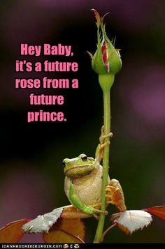 Animal Capshunz: Frogs Have the Best Pickup Lines