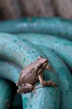 1000 images about frog ponds on pinterest ponds water garden and