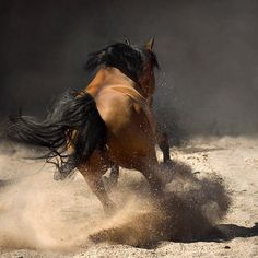 Amazing pictures of horses taken by Wojtek Kwiatkowski  ... - justpaste.it