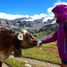 In love with the alps ⛰🐄 #meadowcreek #animalfeeding  #zufallhütte #sudtirol_lovers #martelltal #cowgirlfun #hikingfun #2happyhomeless