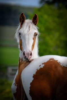 #horses  .....a twist of the neck, or two horses
