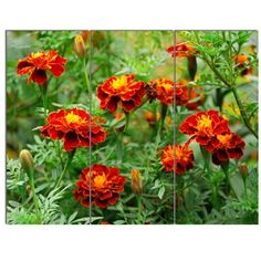 Design Art Bring contemporary abstraction to your home with this metal wall art. This 'Blooming Red Marigold Flowers' 3 Piece Photographic Print on Canvas Set makes it the focal point of any room or office.