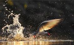 Image result for world best photographer