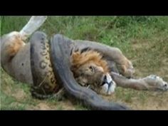 planets funniest animals youtube - photo #20