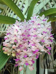 Nice orchid in Thailand