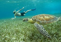 Turtles Encouraged: Shark-Ray Alley, Ambergris Caye I've been here!!