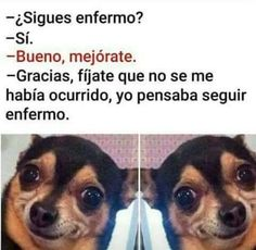 New memes funny espanol ecards Ideas Funny Spanish Memes, Spanish Humor, Stupid Funny Memes, Funny Relatable Memes, Mundo Meme, Mexican Memes, Pinterest Memes, New Memes, Really Funny