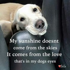 my sunshine doesn't come from the skies it comes from the love in my dogs eyes