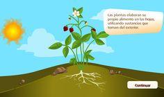EL BLOG DE TERCERO: CÓMO ELABORAN LAS PLANTAS EL ALIMENTO